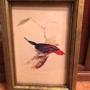 Audubon framed bird print